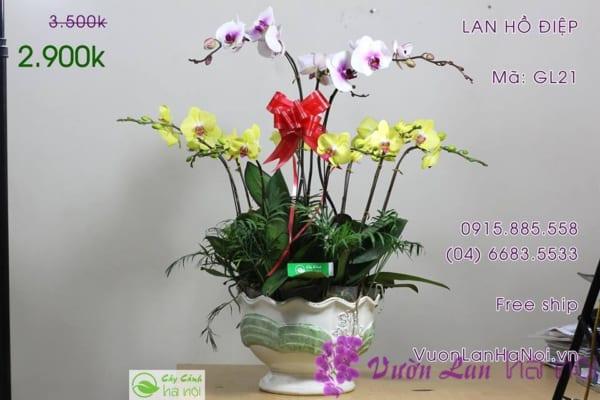 hoa-lan-ho-diep12