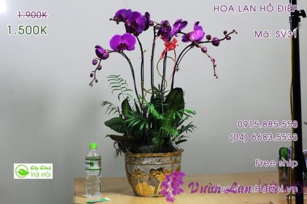 lan-ho-diep11