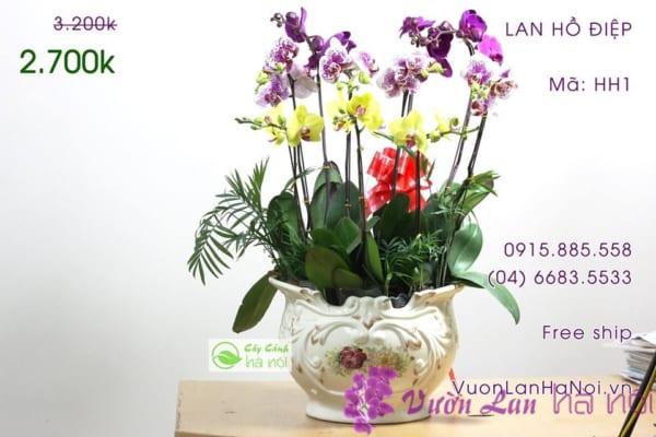 lan-ho-diep14