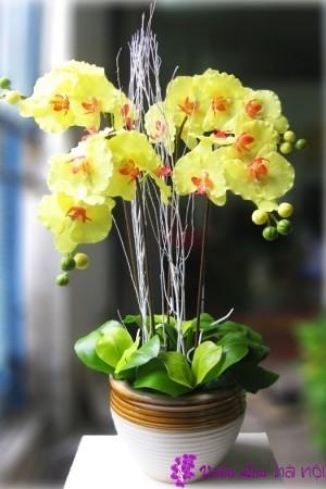 ý nghĩa của hoa lan hồ điệp vàng