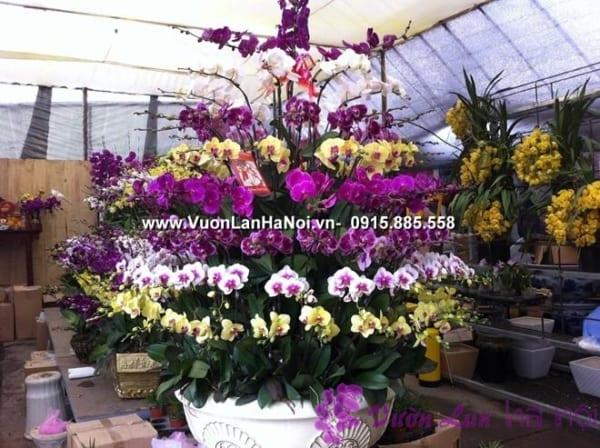 cửa hàng hoa lan hồ điệp
