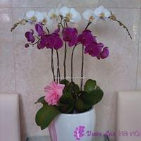 giới thiệu về hoa lan hồ điệp
