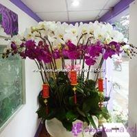 hoa lan hồ điệp tượng trưng cho điều gì