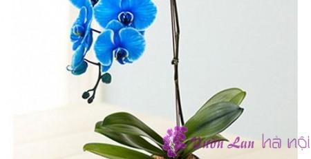màu sắc hoa lan hồ điệp