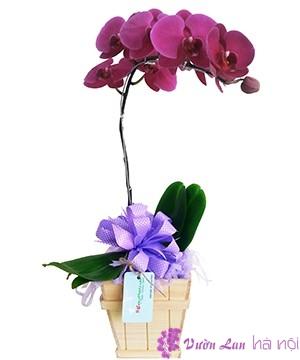 mua hoa lan hồ điệp ở hà nội