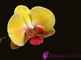 tên khoa học của hoa lan hồ điệp