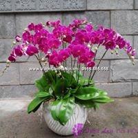 thông tin về hoa lan hồ điệp