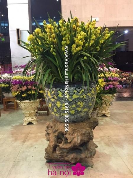 Hoa địa lan Tết chậu hình rồng