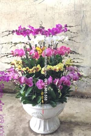 Hoa Lan Ho diep Tet dep 0622 e1484362956514