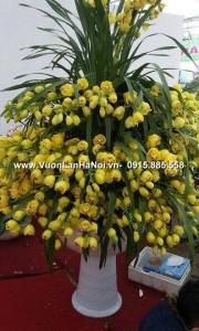 Chậu hoa địa lan Tết - Thịnh Vượng
