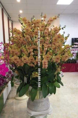 Hoa Lan Ho diep Tet dep 0842 e1484706852441