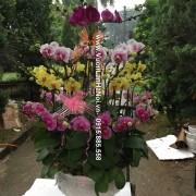 Chậu hoa Tết 4 tầng - Đón lộc xuân