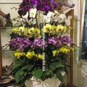 Chậu hoa Tết 5 tầng 60 cành - Rực rỡ