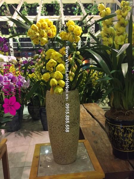 Chậu hoa Địa Lan Sato Tết - Lộc Xuân