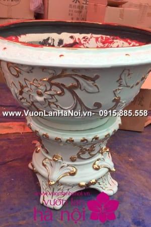 Hoa Lan Ho diep Tet dep 1015