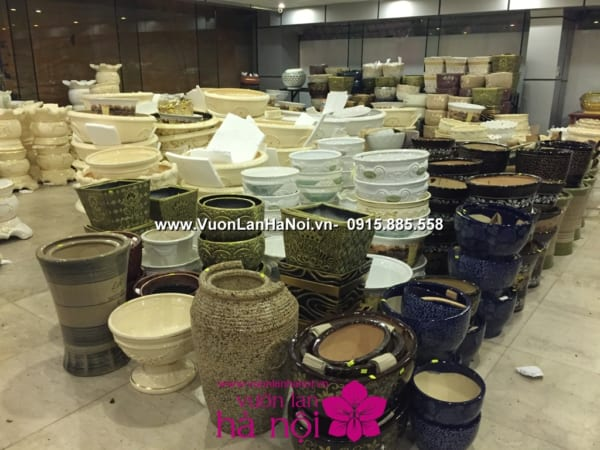 Hoa_Lan_Ho_diep_Tet_dep_1046