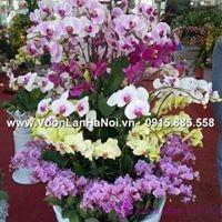 bán buôn hoa lan tết