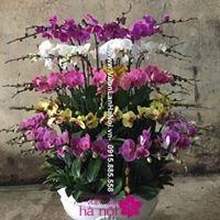cách chăm sóc lan hồ điệp khi ra hoa