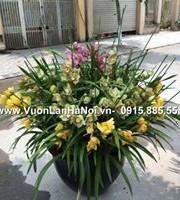 hoa địa lan tết