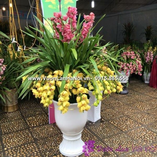 Chậu hoa địa lan Đà Lạt 2 tầng