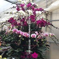 hoa lan hồ điệp ý nghĩa