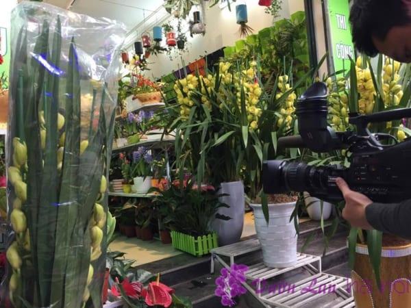 hoa lan hồ điệp xanh