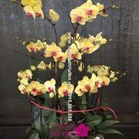 ý nghĩa màu hoa lan hồ điệp ấn tượng5