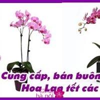 các loại hoa lan tết