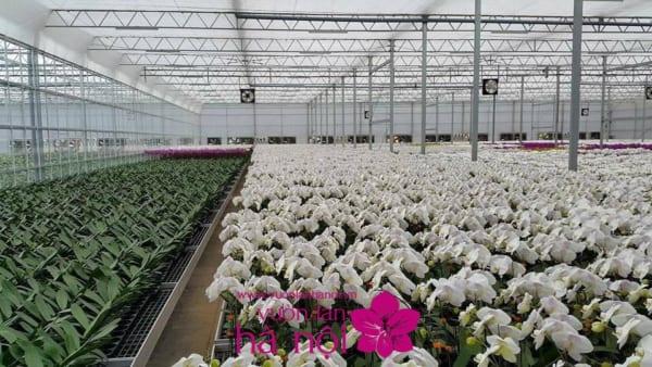 cách trồng hoa lan sau tết