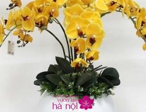 cho lan hồ điệp ra hoa