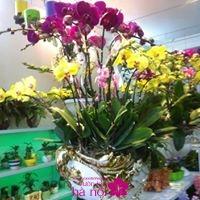 kích lan hồ điệp ra hoa4