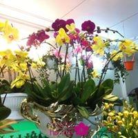 mẫu hoa lan hồ điệp5