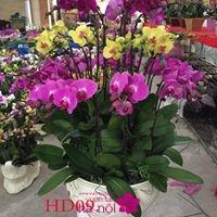 mẫu hoa lan hồ điệp6