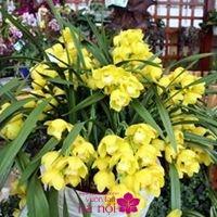 mẫu hoa lan hồ điệp7