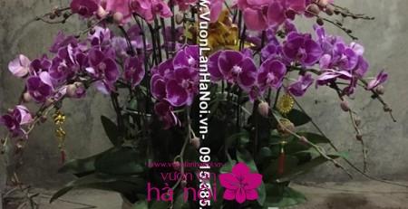 tặng hoa lan ngày tết