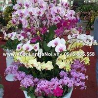 tặng hoa lan ngày tết6