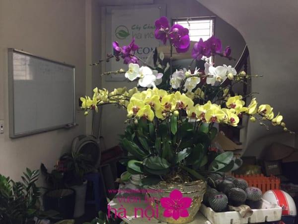 trồng hoa lan sau tết