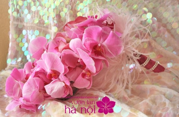 bó hoa lan hồ điệp 8