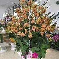 giá bán hoa lan hồ điệp tết 20175