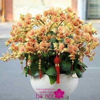 hoa lan nở tết4