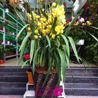 hoa lan nở tết5