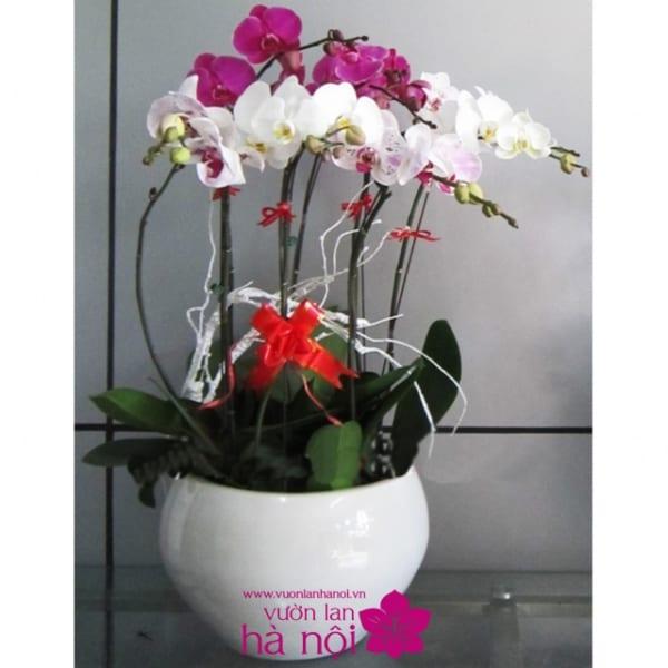 shop bán hoa lan hồ điệp 3