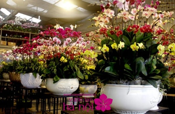 shop bán hoa lan hồ điệp 5